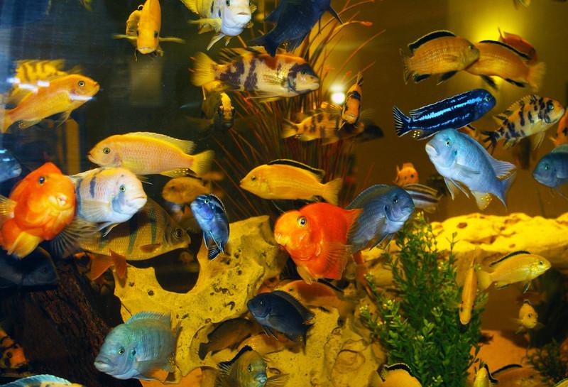 hamptonfishtank1.jpg