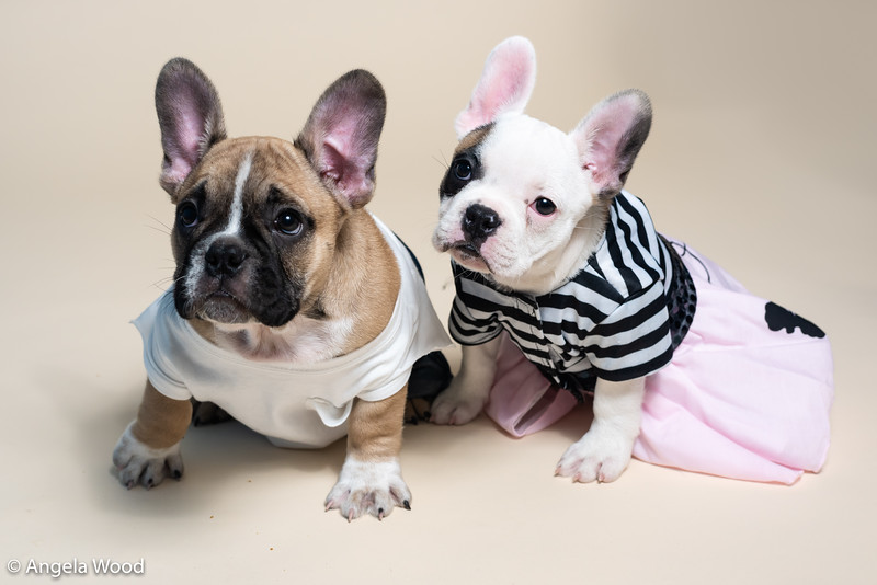 Puppies22.jpg