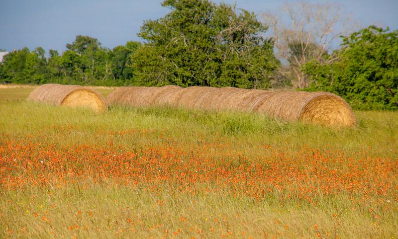 2016_4_9 Texas Wildflower Shoot-8813.jpg