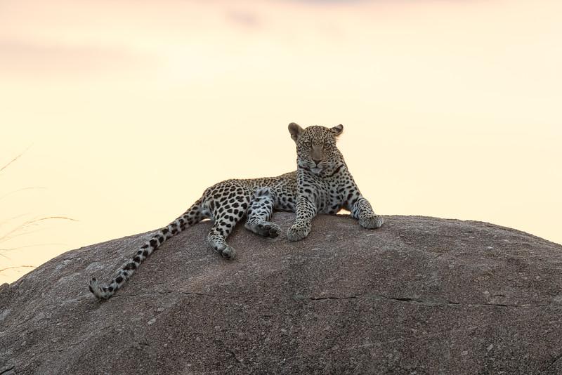 Africa  - 101016- 181-Edit.jpg
