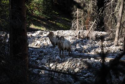 Poudre Pass, RMNP, CO June 19, 2010
