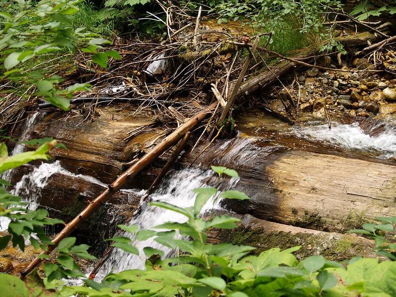 diverted stream on the Giant Cedars Trail, Mt. Revelstoke National Park, British Columbia (August 2006).