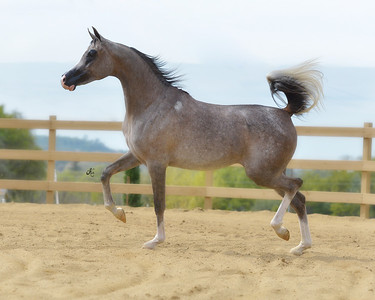 Johnson Equestrian
