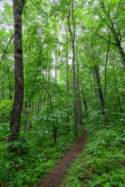 Barnett Branch Trail -- 3,430'
