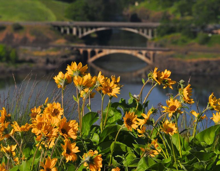 wildflowers13.jpg