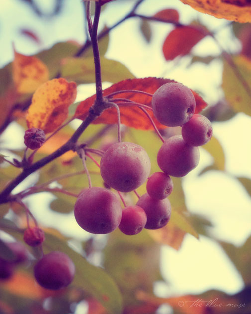 crabapple, autumn, sky