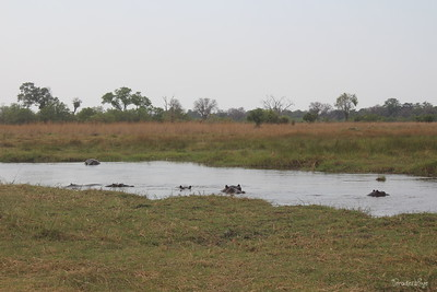 AFRICA trek - BOTSWANA &Beyond drive depart Moremi for flight & drive for fourth 2 nights Nxabega Camp Okavango Delta