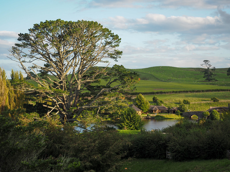 Party tree in Hobbiton at sunset