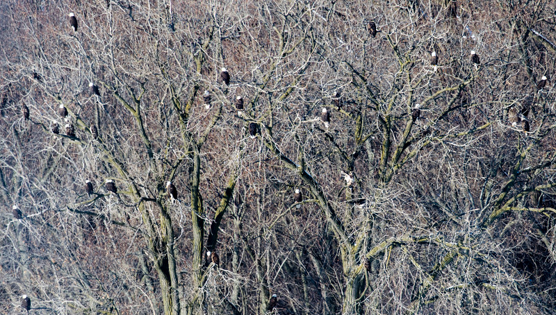 keats-eagles-winter2018-10.jpg