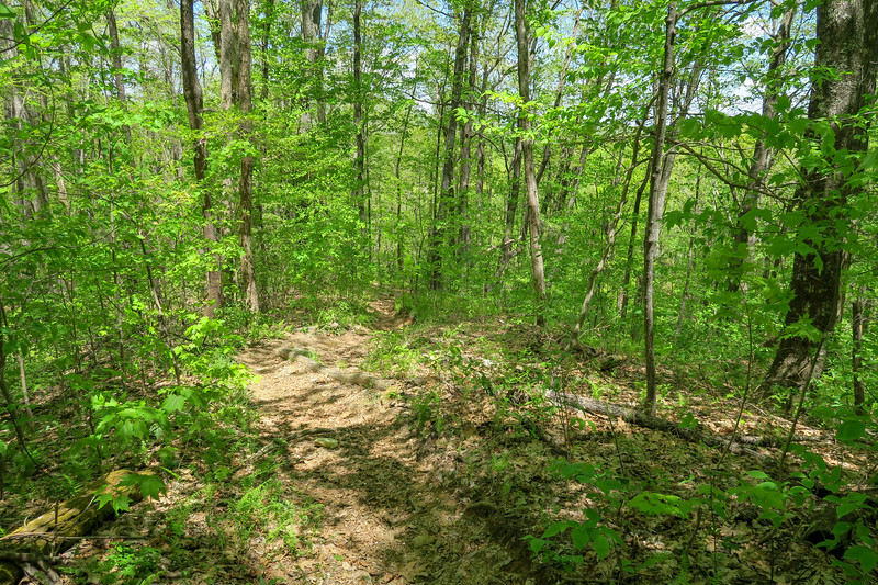 Laurel Creek Trail -- 3,000'