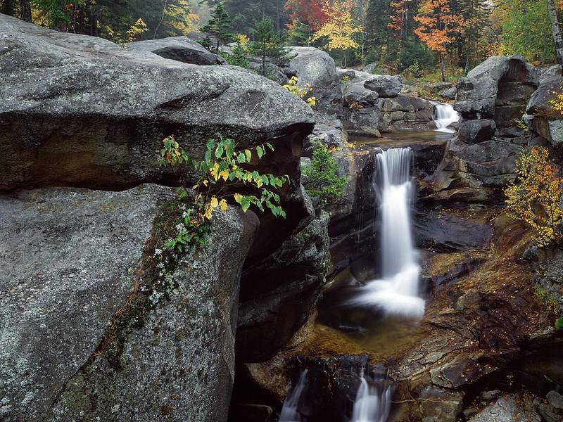 Nature83.jpg