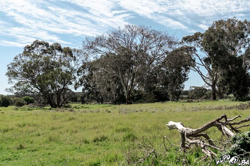 Australia-350.jpg