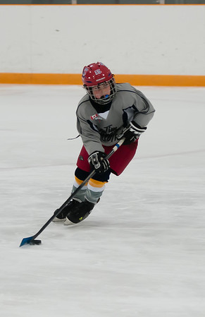 Coyotes Novice Hockey - 2013-14