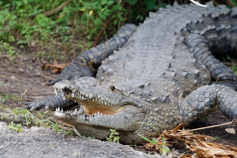 Gatorland24680_ID.jpg