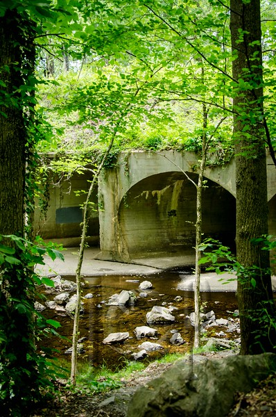 Forest_Hill_WM-1812.jpg
