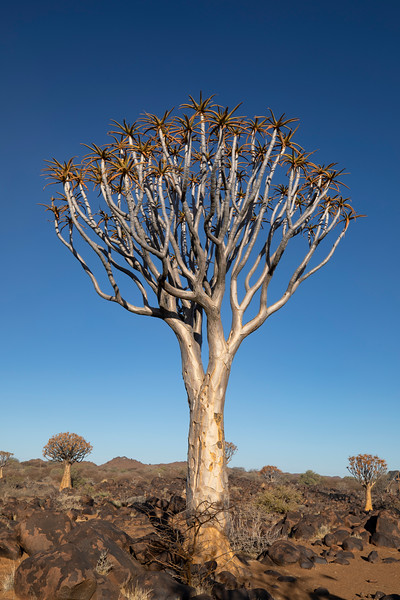 Namibia 69A3558.jpg
