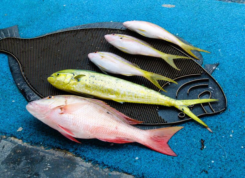 fishing-islamorada-2.jpg