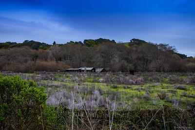Wilder Ridge, Baldwin, Ohlone Bluff and Old Cove Landing Trail