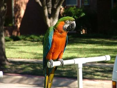 2004 Animal Safari