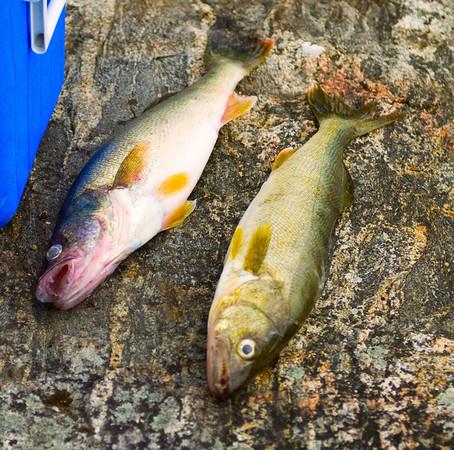 Lake Lac Seul 2009