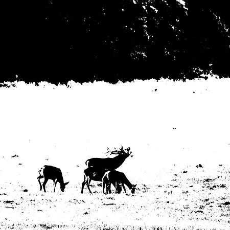 Brâme du cerf à Chambord