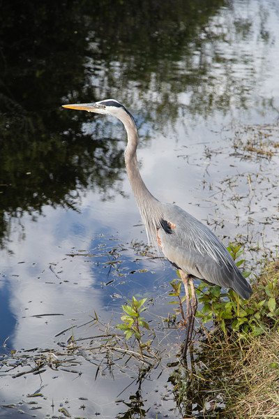 Everglades NP-0258-Select_E.jpg