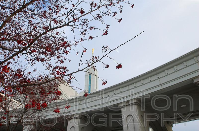 Mt. Timpanogos LDS Temple