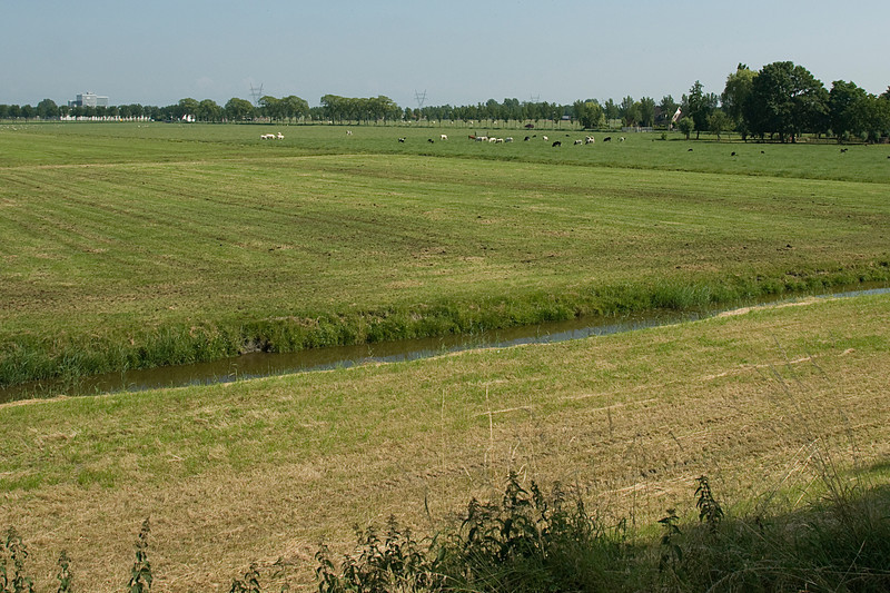Farmland in Beemster Polder in Netherlands