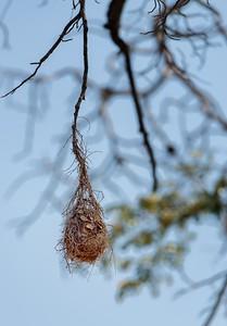 Ultimate Africa - Chobe, Botswanna - Aug. 2014