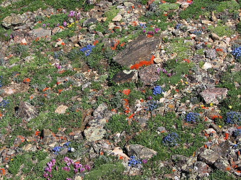 amh FLOWERS (1403).jpg