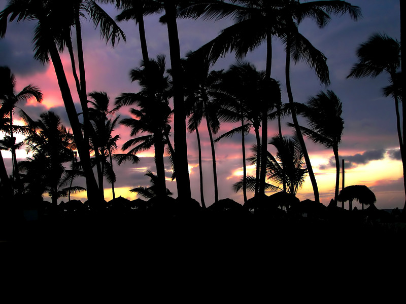Photograph of a beautiful topical sunset viewed through a silhouette of palm trees.