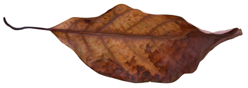 Leaf 8.png