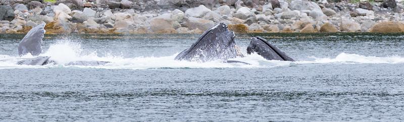 Alaska 2015 - Juneau -  072615-277.jpg