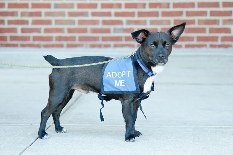 20110312 PetSmart Adoption Event-52.jpg