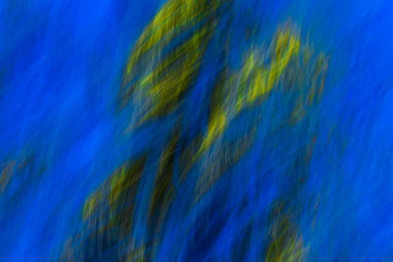 Motion blurred trees against a pure blue sky give a sense of severe winds and motion.