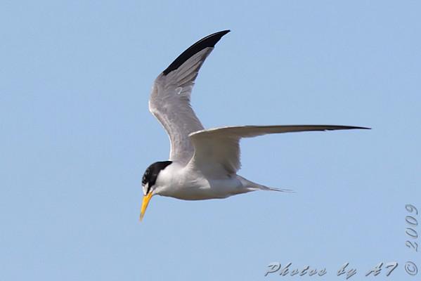 2009-08-20 Riverlands Migratory Bird Sanctuary