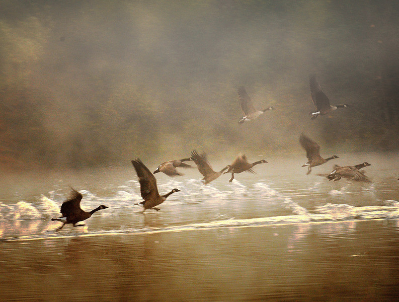 03 Geese flying through fog.jpg