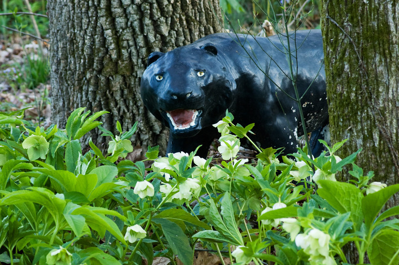 Oh yes, and here's the Panther