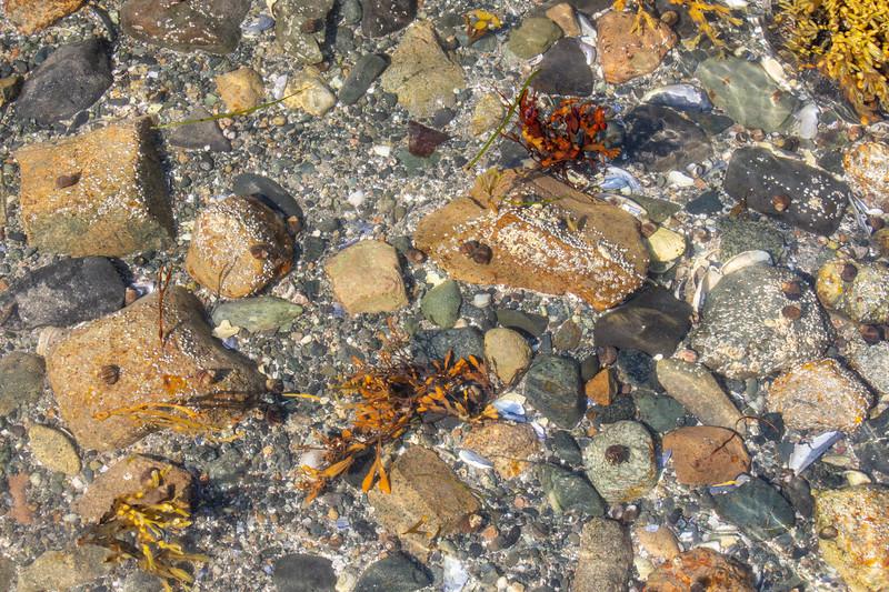 Maine-Acadia-shoreline-rocks7.jpg