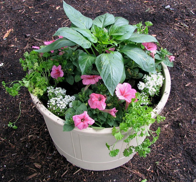 Place a final mulch layer of compost around plants and water regularly.