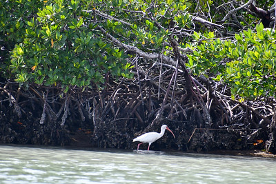 1230PM Mangrove Tunnel Kayak Tour - James, Borgia & Baiman