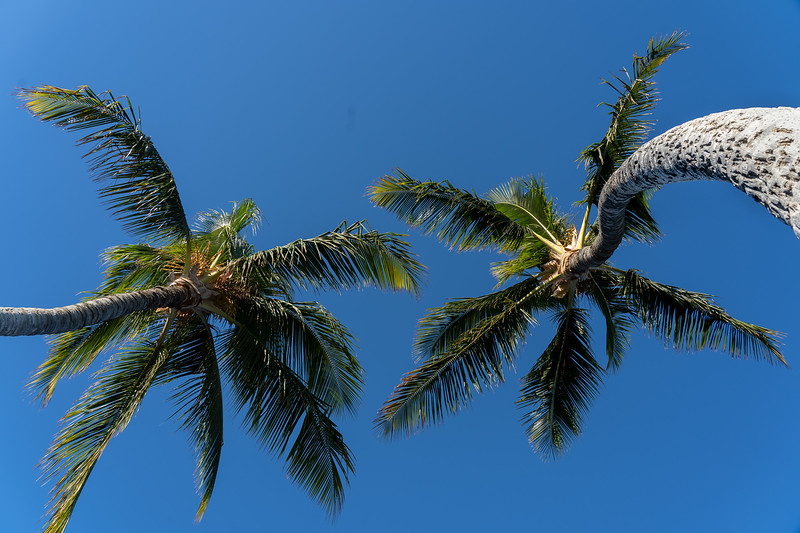 061_Hawaii _DSC7975.jpg