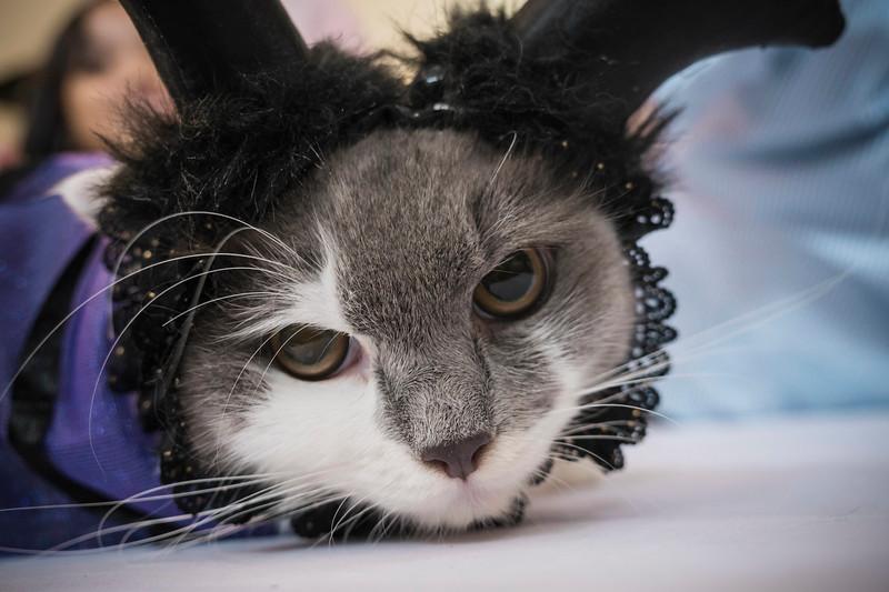 VividSnaps-The-Seletar-Mall-CAT-Dress-Up-Contest-087.jpg