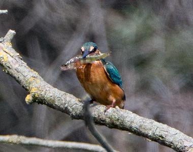 BIRDS OF THE DANUBE DELTA - ROMANIA