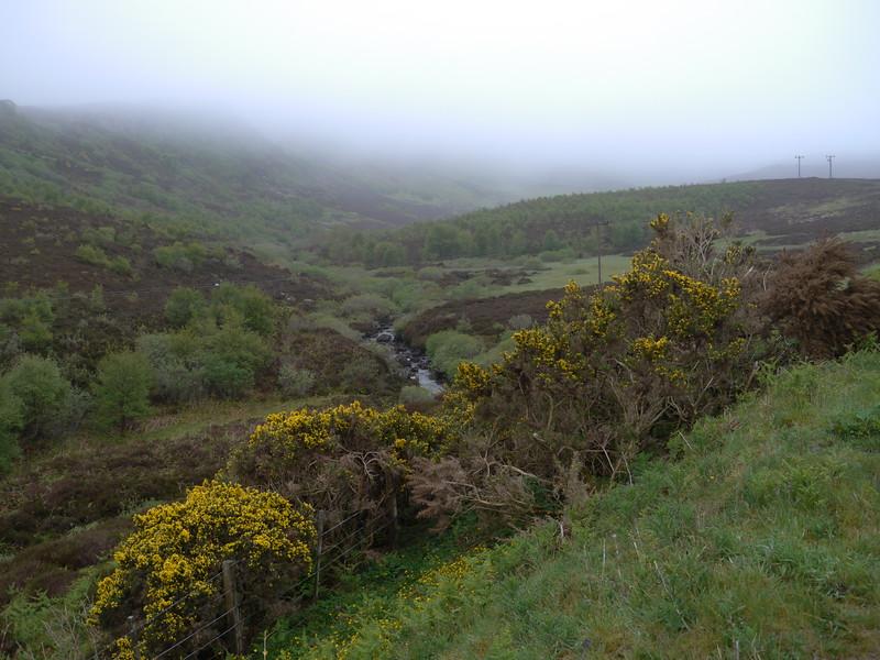 @RobAng Juni 2015 / Portree, Isle of Skye / Eilean a'Cheo Ward  (Inner Hebridies), Scotland, GBR, Grossbritanien / Great Britain, 118 m ü/M, 2015/06/20 10:38:25