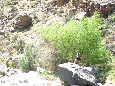 Badger Springs - April 2008