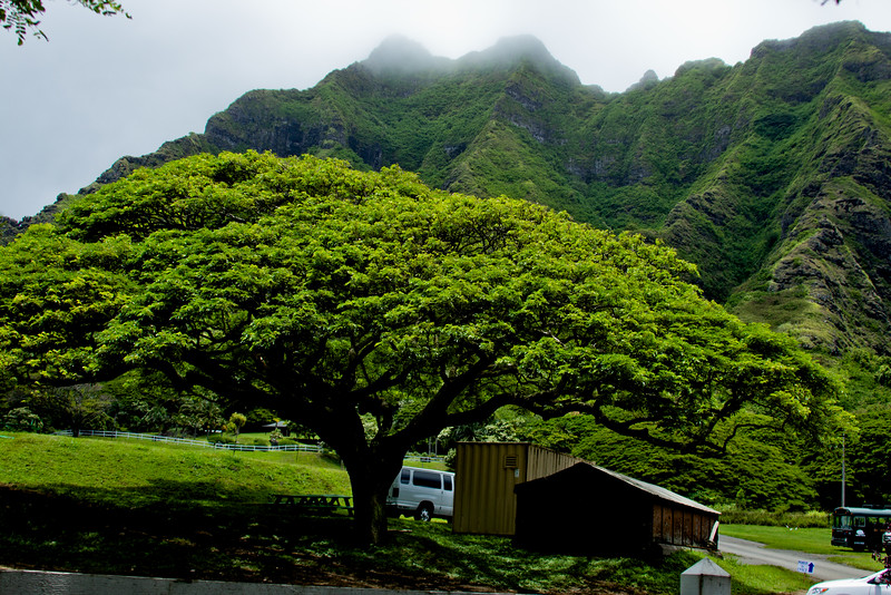 Journey into Oahu Photograph 61