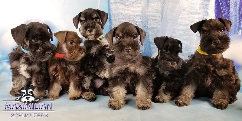Hettie Pups 007.jpg