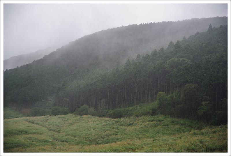 Pampas fields in a heavy downpour