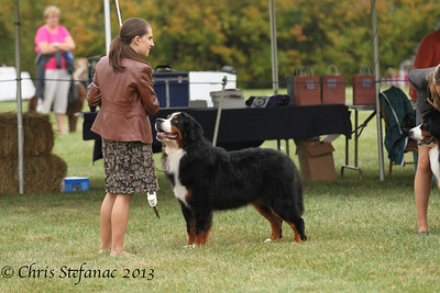Best of Breed 10/6/13